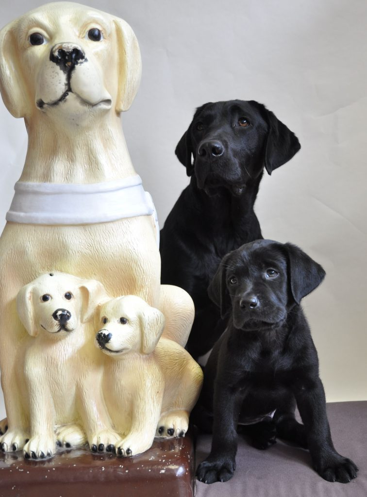 Pokladnička zbierky Štvornohé oči - maketa sediaceho vodiaceho psa, pred ktorým sedia dve šteniatka. Sú svetlej farby a vedľa nich sedí skutočná predloha, čierny vodiaci pes so šteniatkom.