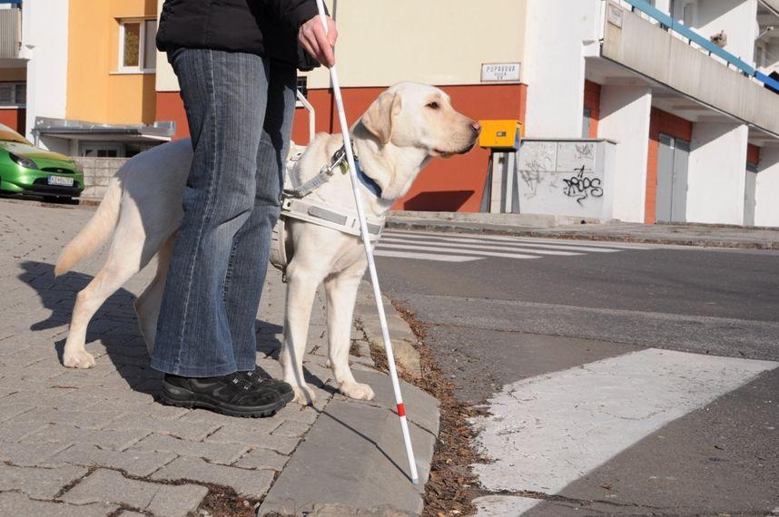 Vodiaci pes stojaci pri nohách svojho pána, ktorý má v ruke bielu palicu. Spolu čakajú na priechode pre chodcov.